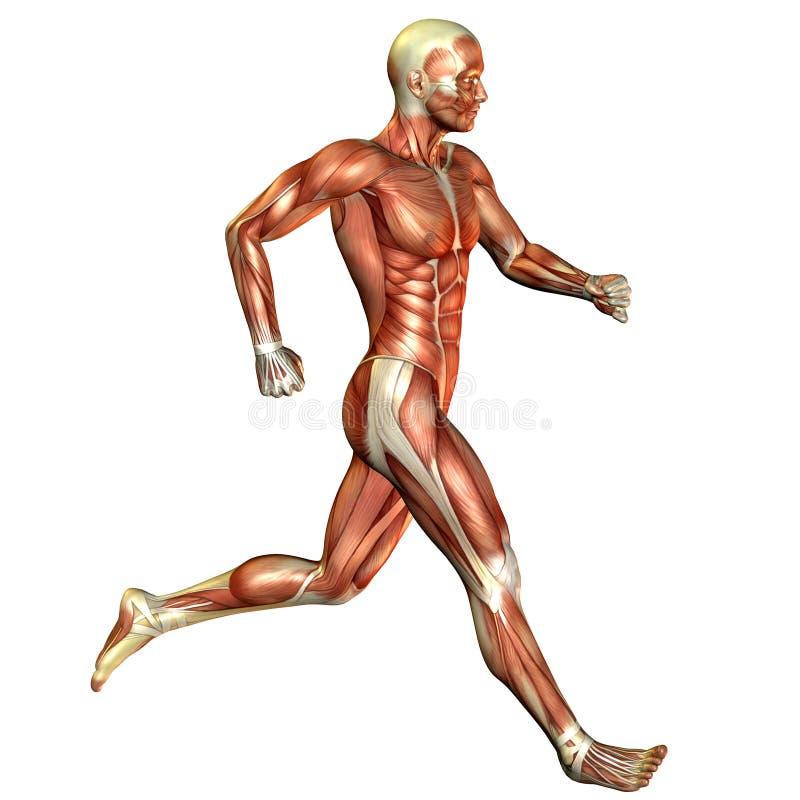 Homem Running do músculo ilustração do vetor