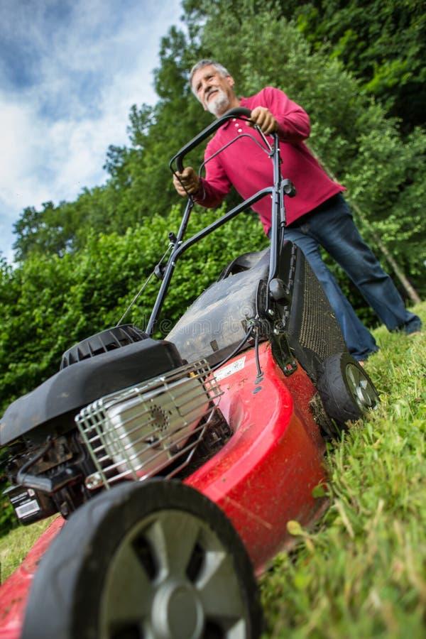 Homem sênior que sega o gramado foto de stock