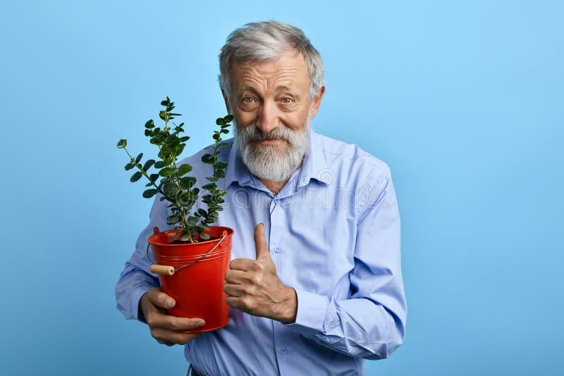 Homem superior feliz no potenciômetro de flor da terra arrendada da camisa e mostrar no polegar azuis acima foto de stock royalty free