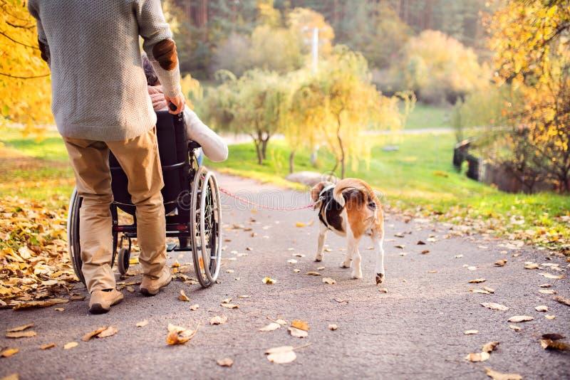 Homem superior, mulher na cadeira de rodas e cão na natureza do outono fotografia de stock