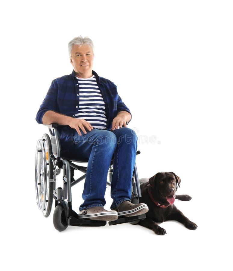 Homem superior na cadeira de rodas com seu cão no fundo branco fotos de stock