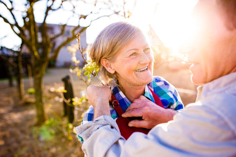 Homem superior que ajusta o avental da mulher, par idoso, jardim ensolarado, fotografia de stock