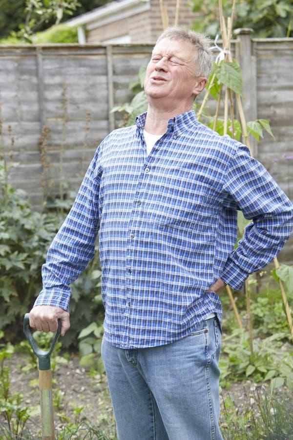 Homem superior que sofre da dor nas costas enquanto jardinando foto de stock