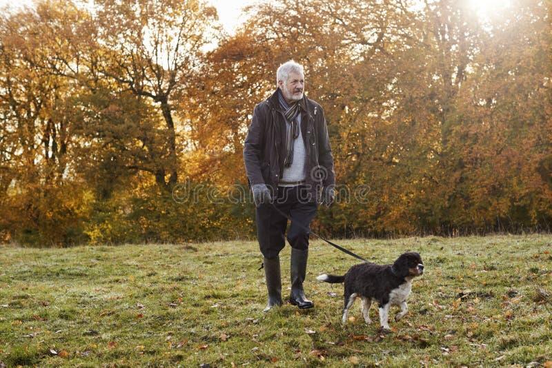 Homem superior que toma o cão para a caminhada em Autumn Landscape imagens de stock