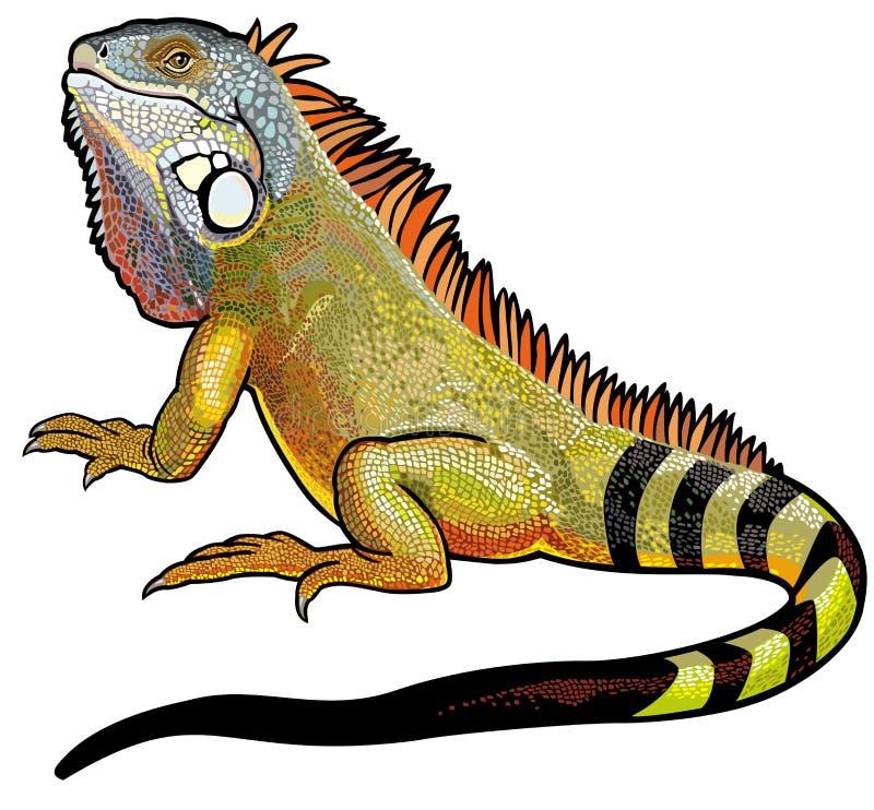 Iguana verde ilustração royalty free