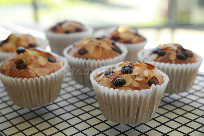 Homemade apricot chocolate chip almond slice muffins stock photography