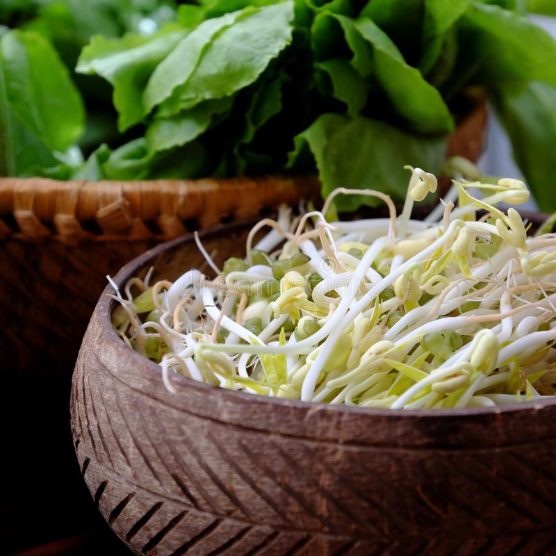 Homemade bean sprouts for food safety, germinate of green beans. Make nutrition vegetable cuisine, close up of sprout with basket on wooden background royalty free stock photography