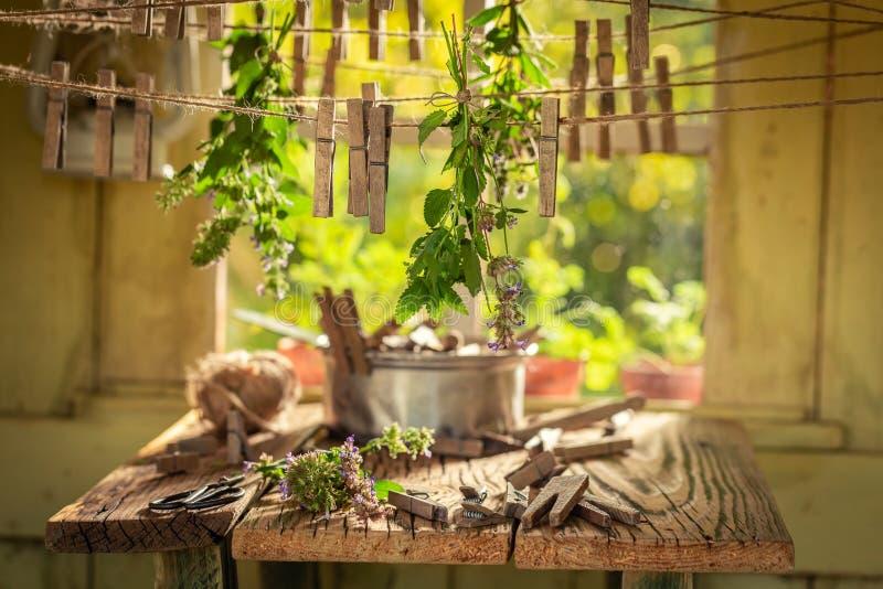 Homemade herbal dryer with oregano in a summer garden stock photo