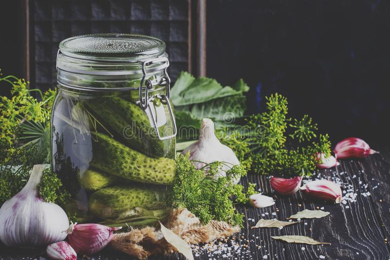 Homemade marinated or pickled cucumbers with dill, garlic and sp royalty free stock photography