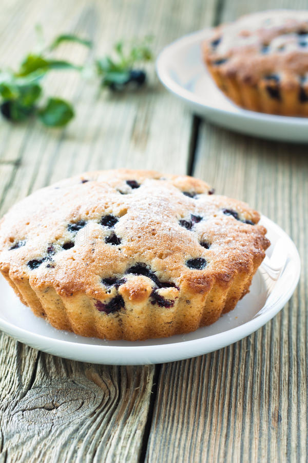 Homemade mini fresh blueberry pies on white plate royalty free stock photography