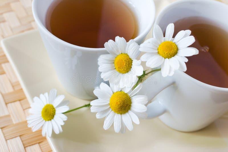 Homemade remedy - herbal camomile tea matricaria chamomilla - royalty free stock photo