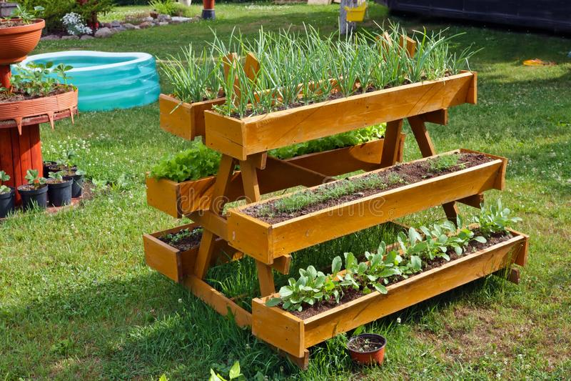 Homemade rural  mobile wooden vegetable beds. For growing onions, dill and radish plants. Sunny summer day outdoor shot royalty free stock images
