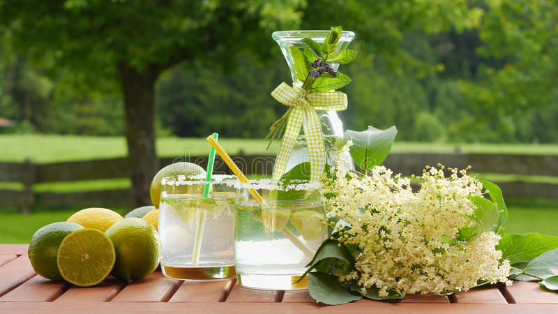 Homemade summer drink of elderflower. Garnished with elderflower, lime, lemon; nice background shows natural garden stock photos