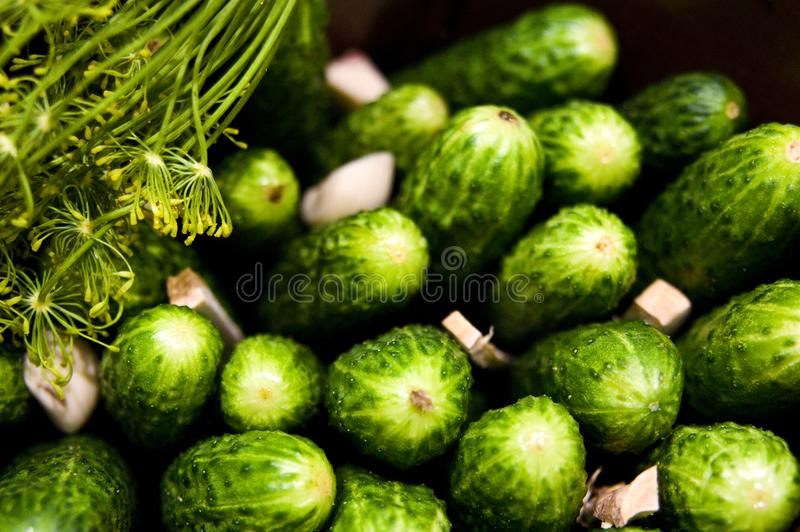 Homemage pickled cucumbers still life food photo royalty free stock photo