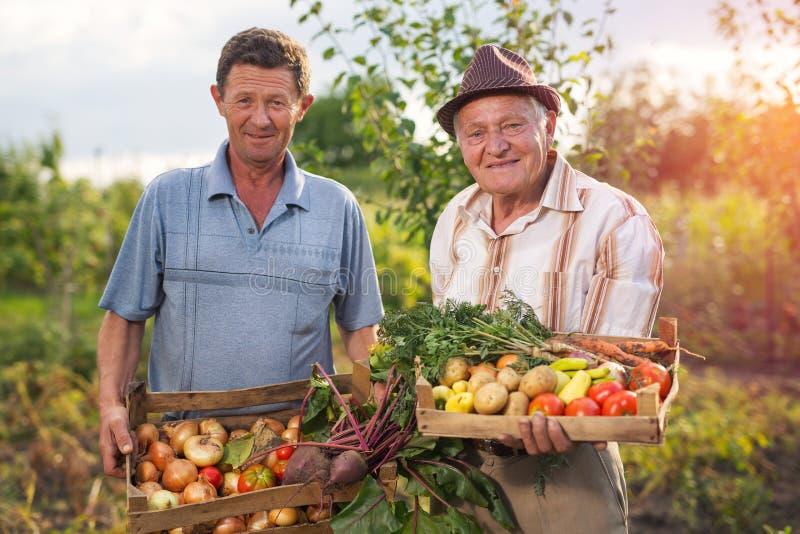 Homens com os vegetais colhidos no jardim foto de stock royalty free