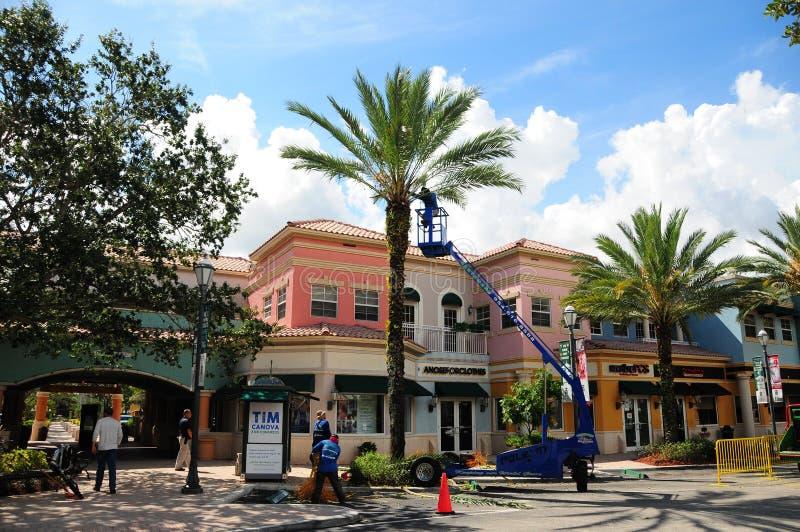 Homens que aparam palmeiras na frente das lojas, FL fotografia de stock