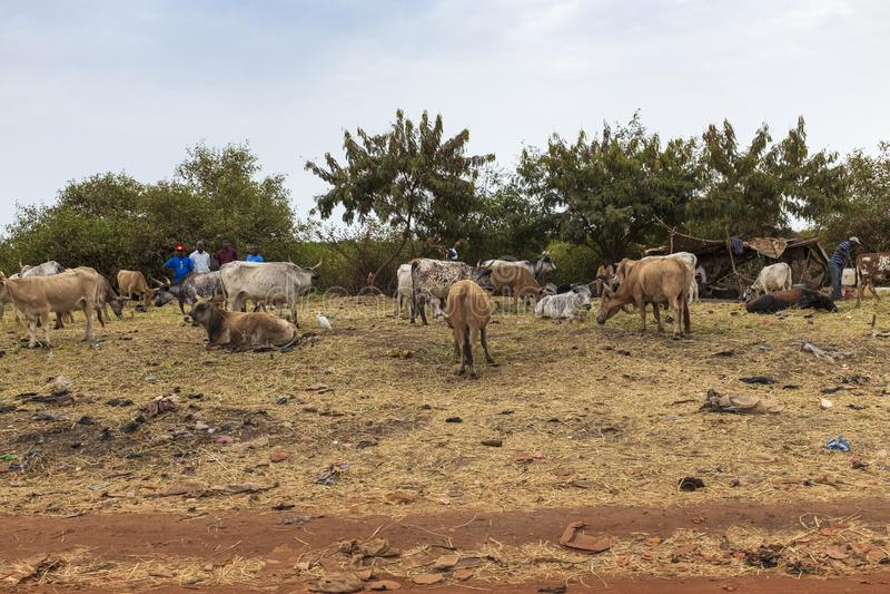 Homens que vendem rebanhos animais nos subúrbios da cidade de Bissau, em Guiné-Bissau imagem de stock