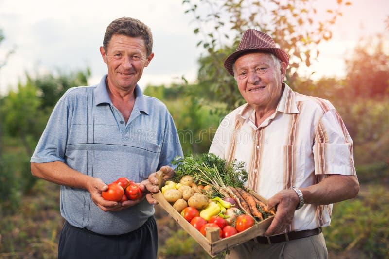 Homens superiores com vegetais colhidos fotografia de stock royalty free