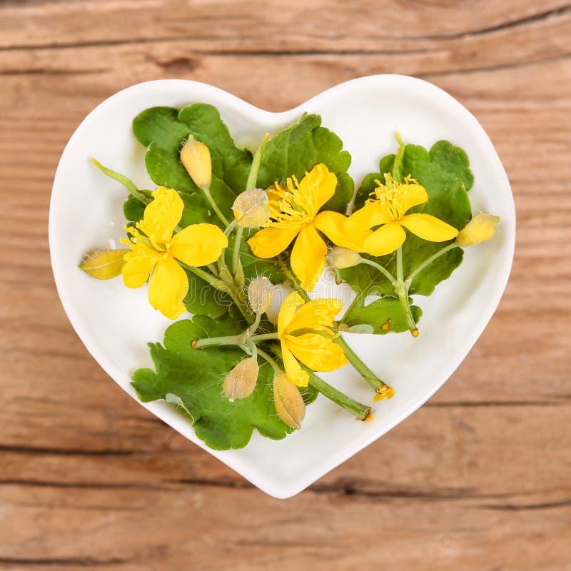 Homeopatía y el cocinar con celandine foto de archivo