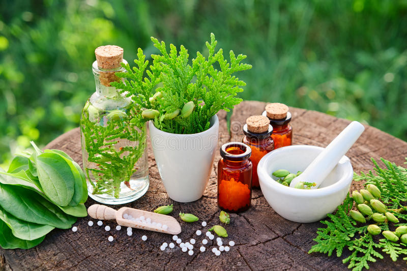 Homeopathic bottles, Thuja occidentalis, Plantago major drugs and mortar. royalty free stock photography
