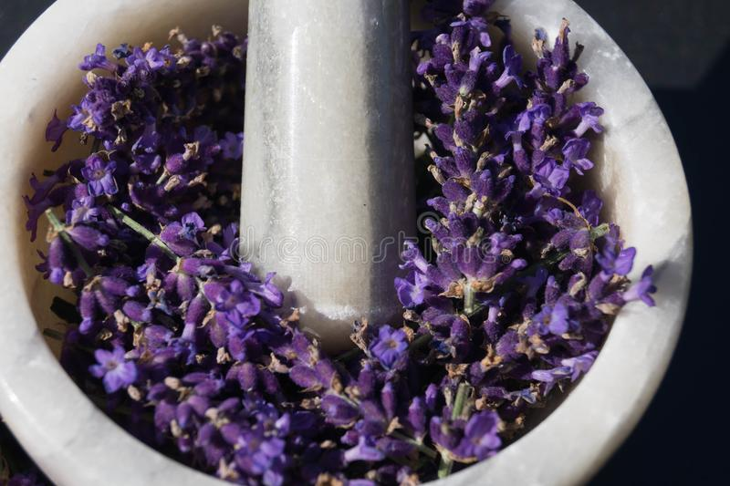 Alternative medicine with lavender. Homeopathy, the alternative medicine healing with natural medicinal herbs and flowers of the nature stock photos