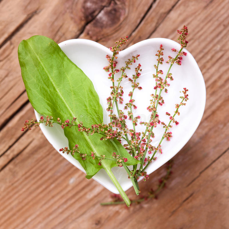 Free Homeopathy And Cooking With Sorrel Royalty Free Stock Photography - 74322087