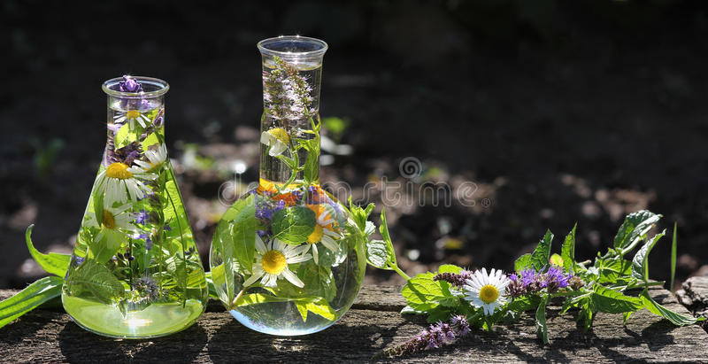 Homeopathy and cooking with herbs. Erlenmeyer flask and flat bottom flask with chamomile, calendula and other medicinal herbs for cooking or medicine stock photos