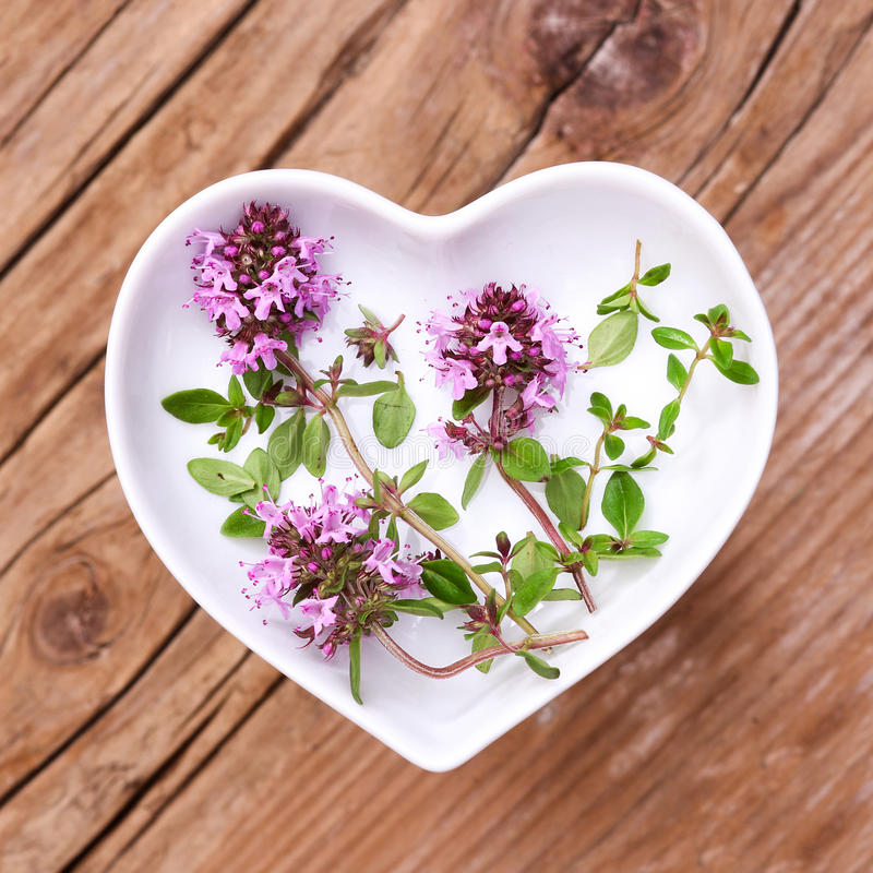 Homeopathy and cooking with thyme. Thyme for homeopathy, cooking or tea royalty free stock image