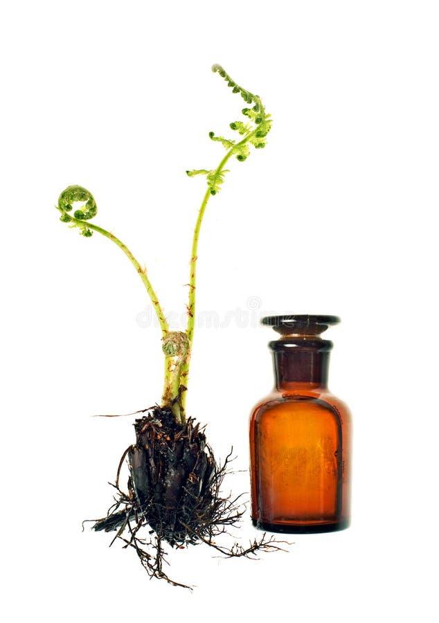 homeopathy för balsamflaskfern royaltyfri fotografi