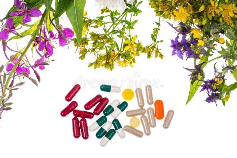 homeopathy Växt- kapslar, medicinalväxter på vit backgroun arkivfoto