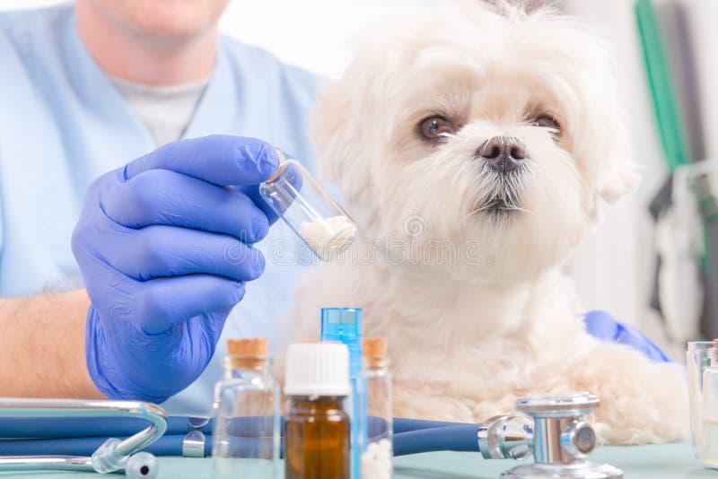 Homeopati för en hund arkivfoton