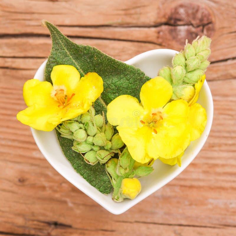 Homeopati och matlagning med mullein arkivbild