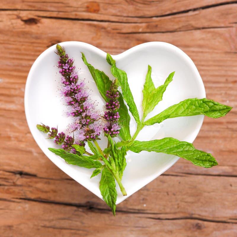 Homeopati och matlagning med pepparmint arkivfoton