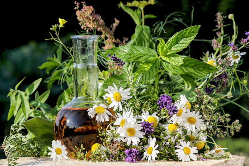 Homeopatia e cozimento com plantas médicas fotos de stock