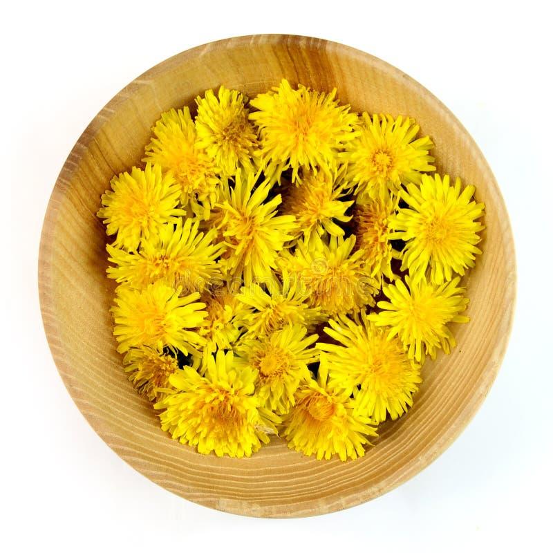 Homeopatia i kulinarni mit dandelions odizolowywający na bielu, zdjęcia royalty free