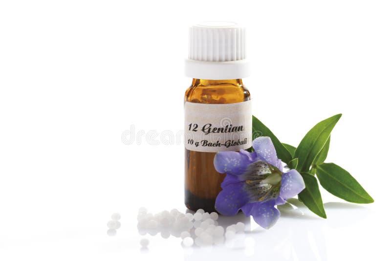 Homeopatyczne globula, gencjana (Gentiana) obraz stock