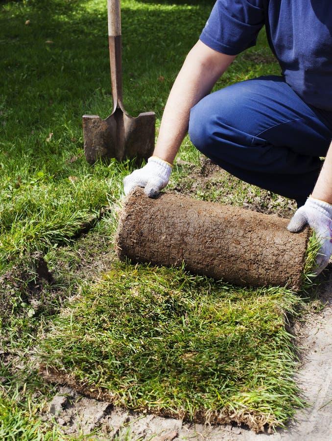 Homme étendant le gazon pour la nouvelle pelouse de jardin image libre de droits
