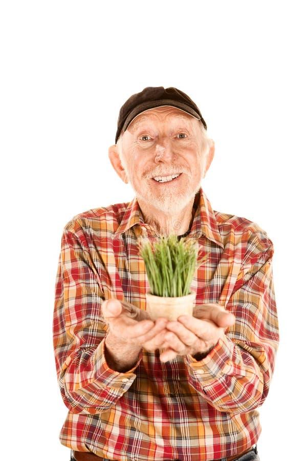 Homme aîné bel avec l'herbe dans le petit bac image stock