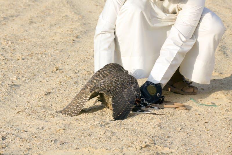 Homme arabe tenant son faucon pour l'usage de lui pour chasser images stock