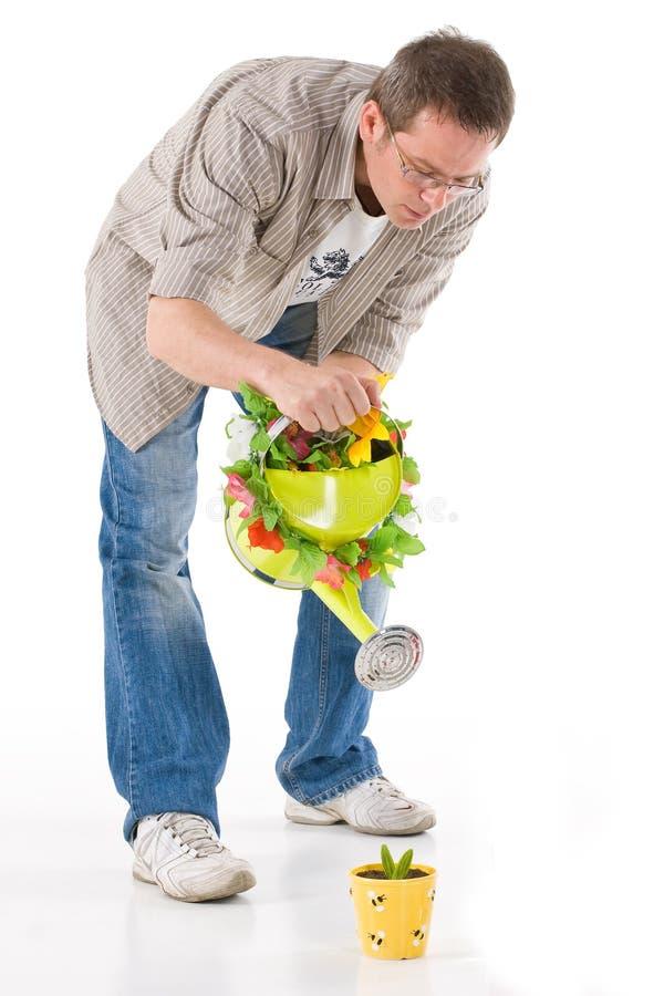 Homme arrosant la petite centrale photo stock