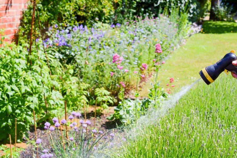 Homme arrosant le jardin avec un tuyau d'arroseuse un jour ensoleill? photographie stock libre de droits