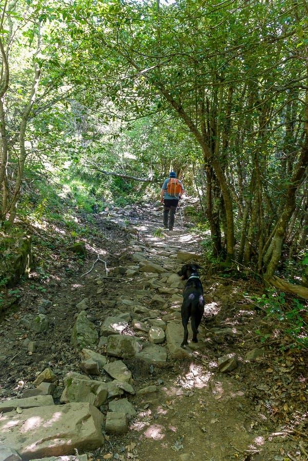 Homme avec son chien sur l'itinéraire de source le cuivre Parc naturel de Fuentes de Carrionas l'espagne image stock