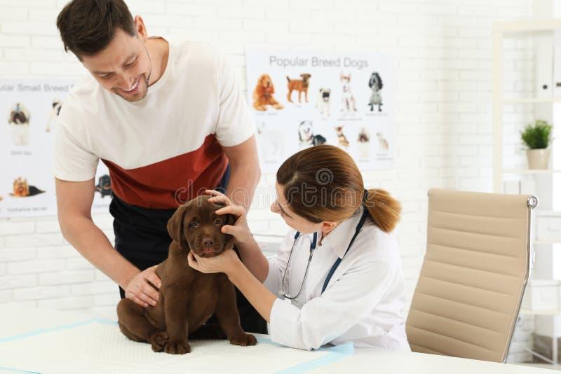 Homme avec son vétérinaire de visite d'animal familier Doc. examinant le chiot de Labrador photo stock