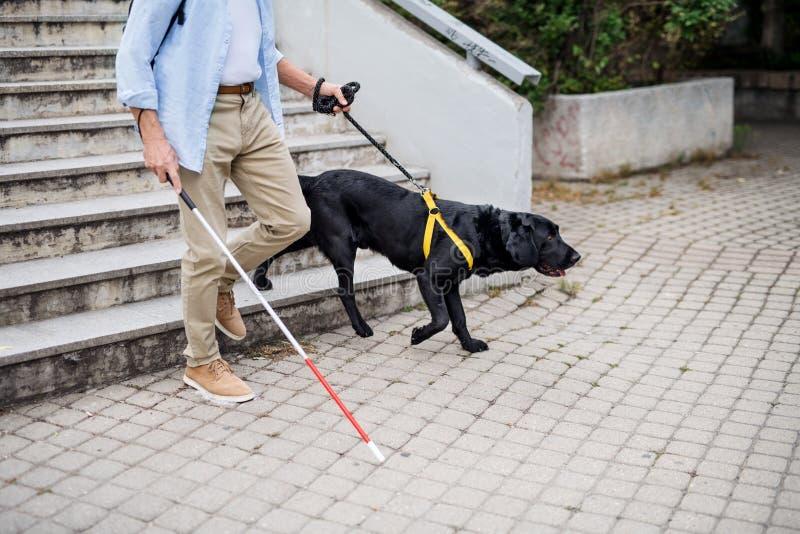 Homme aveugle avec chien guide marchant dans les escaliers de la ville, au milieu image libre de droits