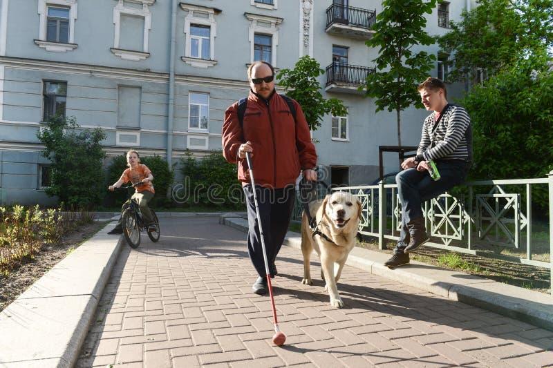 Homme aveugle et chien de guide image stock