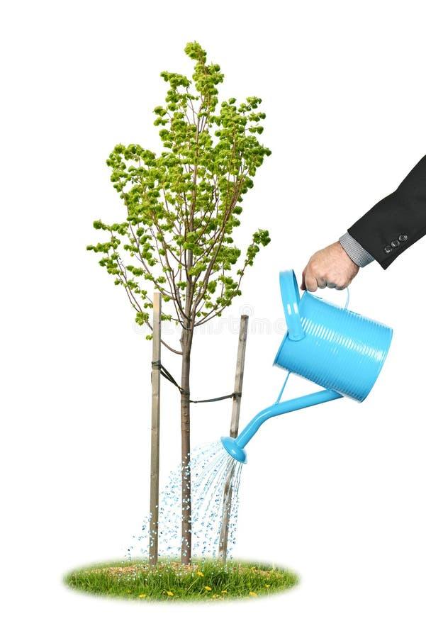 Homme d'affaires arrosant le jeune arbre images stock