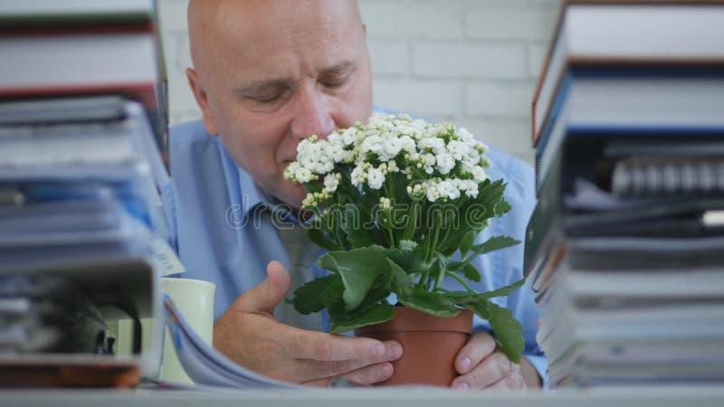 Homme d'affaires décontracté dans le bureau sentant une belle fleur photos stock