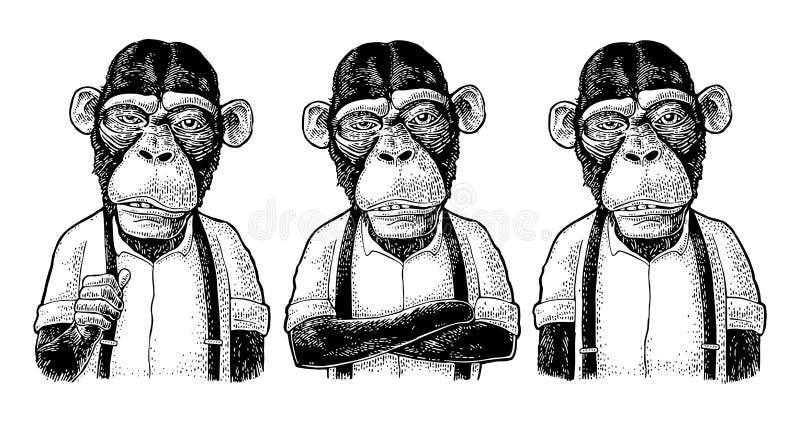 Homme d'affaires de singe dans la chemise et la bretelle Différentes poses gravure illustration stock