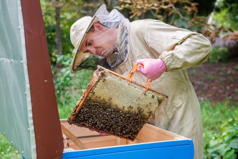 Homme d'Apiarist travaillant en nature en été photo stock