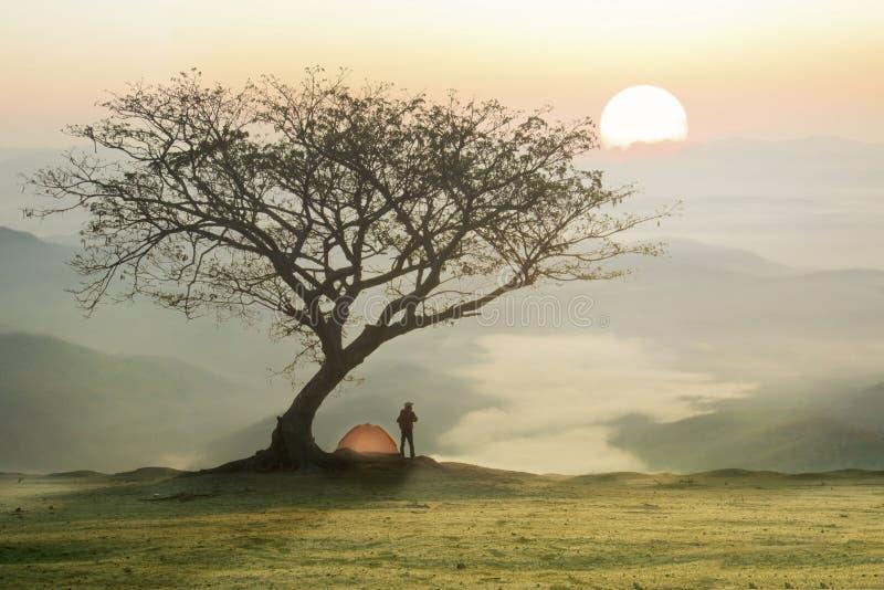 Homme dans le camping sous l'arbre avec le coucher du soleil ou le lever de soleil image libre de droits